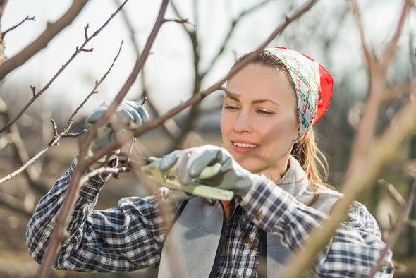 Основные принципы весенней обрезки деревьев