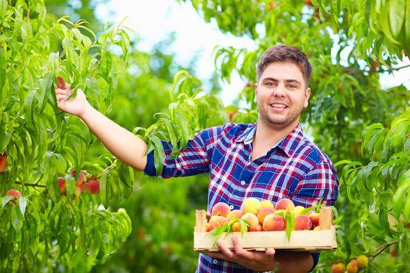 Персики, районированные, для северных регионов