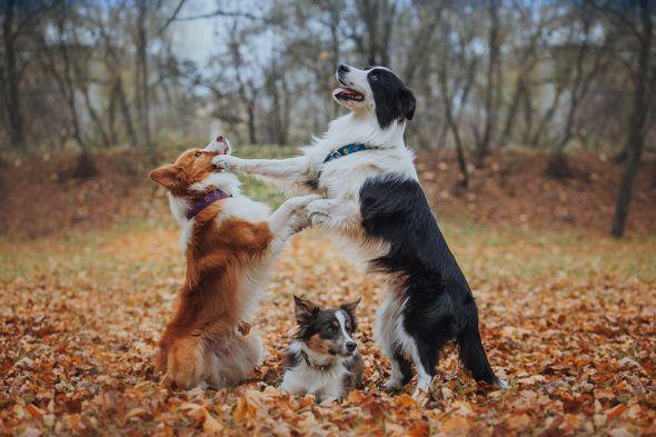 собаки играют в парке