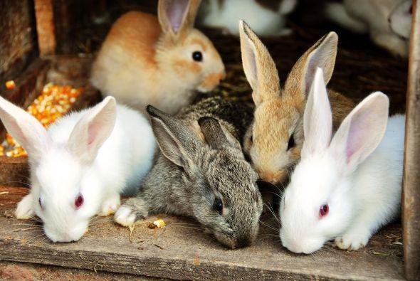 Заболевания пищеварительного тракта у кроликов:профилактика и лечение