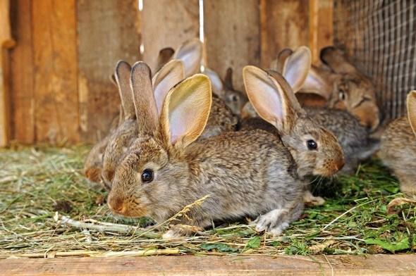 Общие правила содержания кроликов