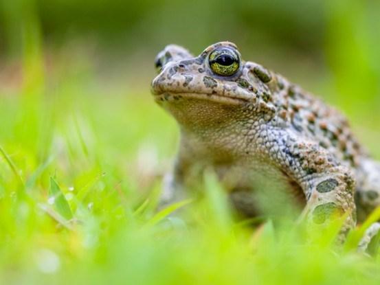 Жаба в траве