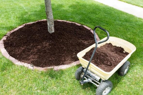 Мульчирование дерево сад