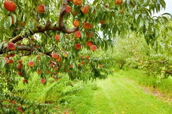 Практика обезвреживания: распознаем и боремся с садовыми вредителями