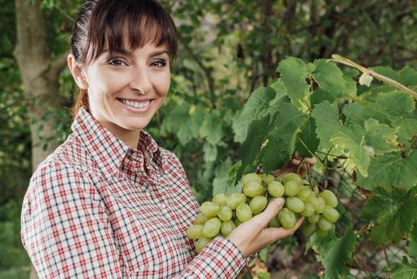 Девушка виноград урожай