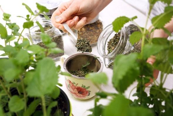 Заваривать лекарственные травы