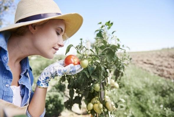 Девушка смотрит на помидоры