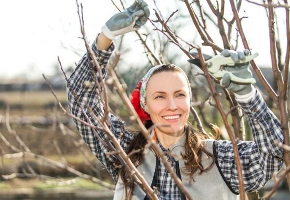 Девушка проводит  обрезку дерева