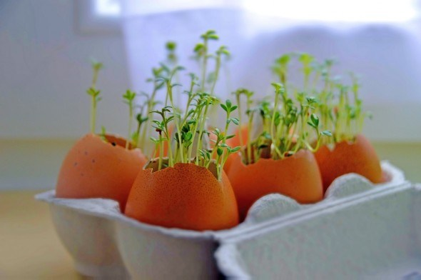 """Город у стилі """"мікрогрін"""": вирощуємо зеленні культури на підвіконні"""