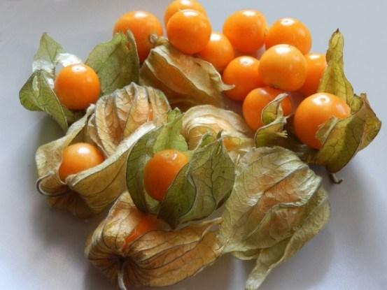Смачні ліхтарики: вирощуємо овочевий та ягідний фізаліс