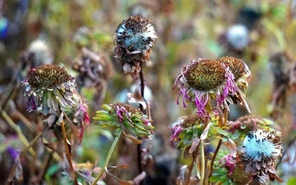 Цветоводы в ноябре: день за днем