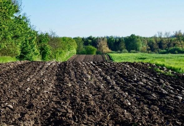 Кислий ґрунт — прихований ворог врожаю