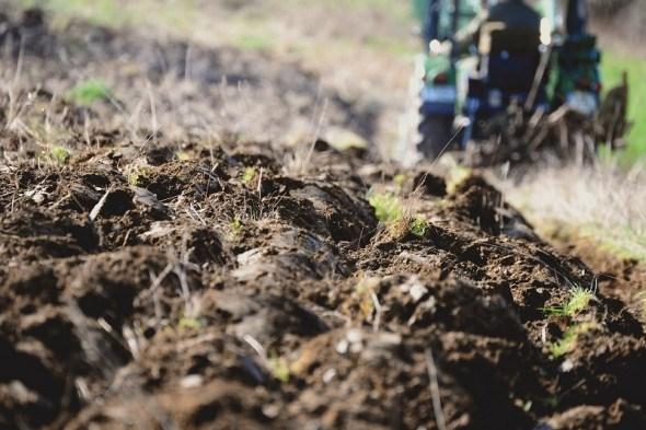 """Земля з """"характером"""": як виміряти родючість ґрунту на ділянці"""