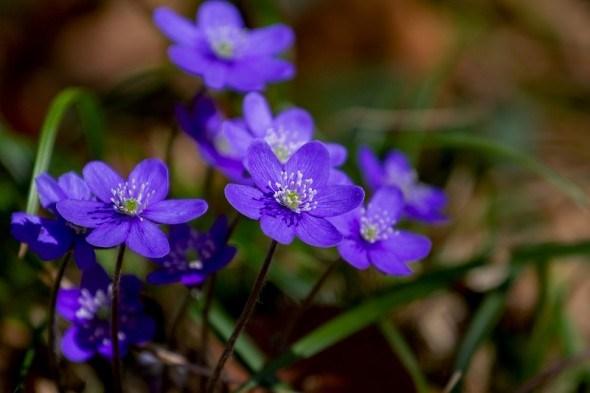 Альпійська гірка в дачній тіні: рослини