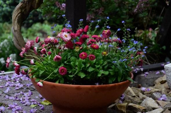 Садочок у кишені: рослини в контейнерній культурі