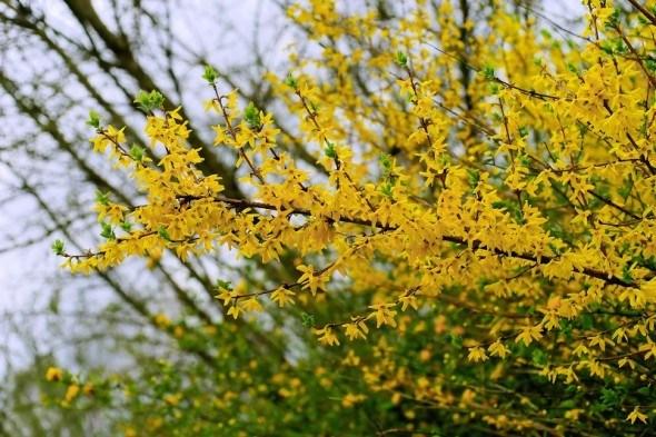 Календарь цветовода: апрель