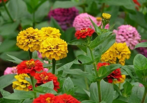 Майорить у квітниках: