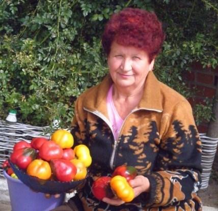 Улюблені Гогошари: досвід вирощування перцю для захоплених городників