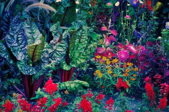 Користь, краса і смак: пряно-ароматичні трави та овочі на декоративній клумбі