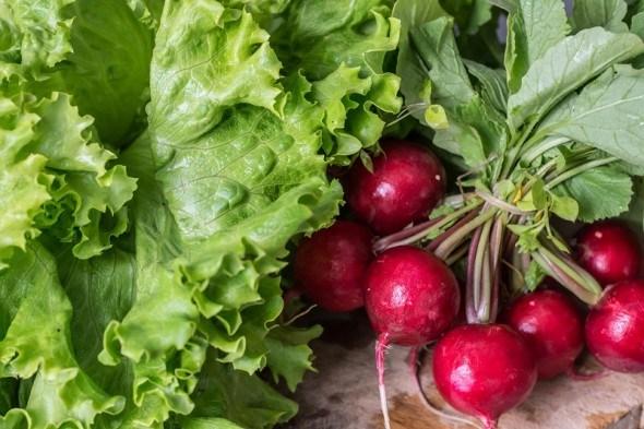 Весенняя лихорадка: начинаем сеять овощи