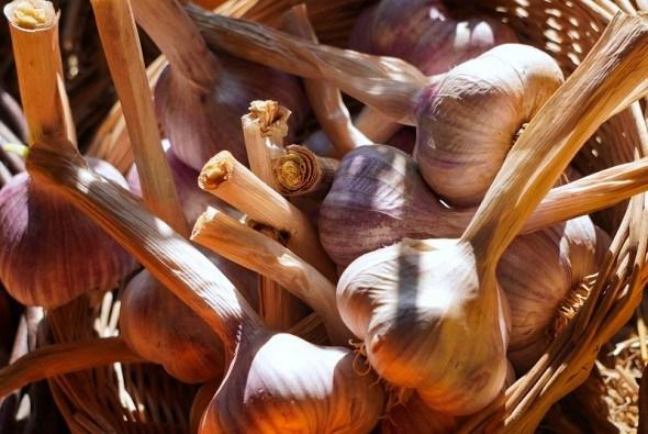 Часникові хитрощі: як отримати та зберегти гарний врожай часнику
