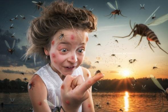 Атакуют опасные насекомые
