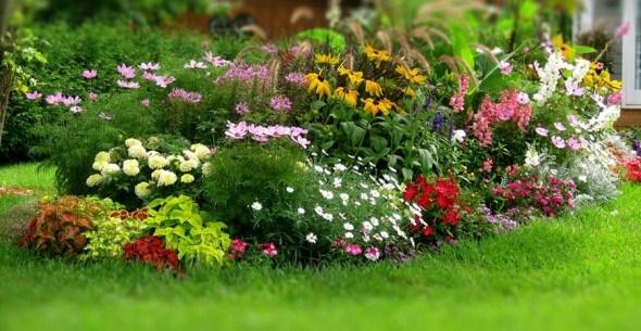 Цветы для летнего посева