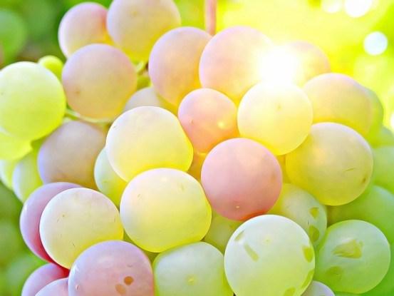 Виноград – уникальный целитель