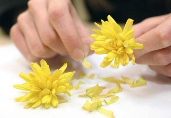 Цветки хризантем