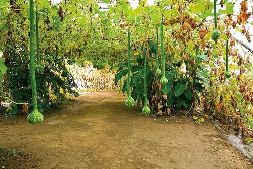 Растения в Potager Etraordinaire