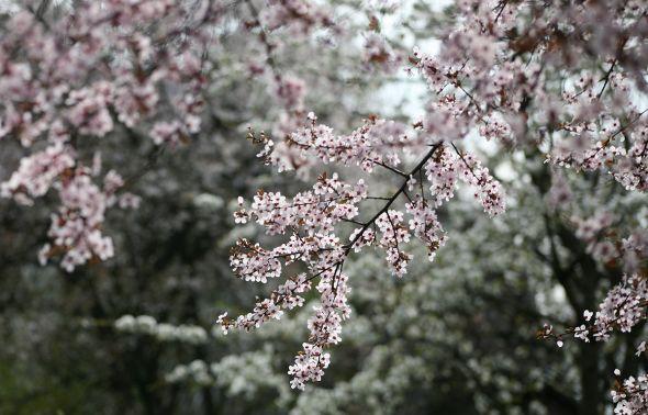 Календарь садовода: что нужно сделать в апреле?