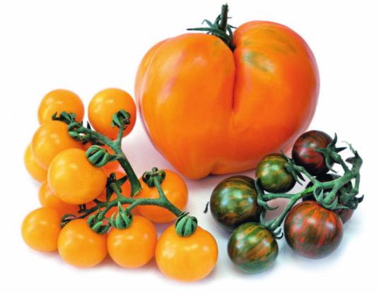 Велике у маленькому: перспективи томатів чері