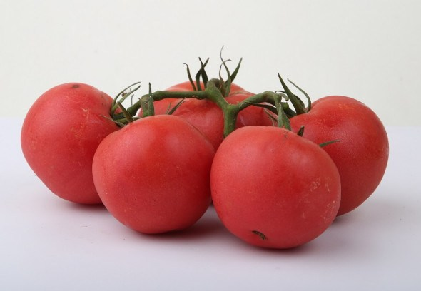 Новинки сортів томату: стійкі до вірусів, зі смачніми великими плодами...