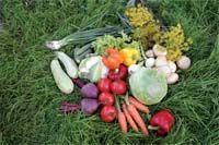 Не спешите обвинять овощи они всего лишь заложники нашей беспечности