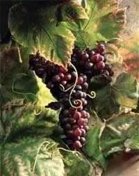 Крымский виноградник по-французски