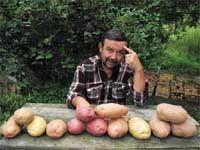 Картофель: ответы на непростые вопросы