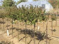 Плодовые сады в Чехии