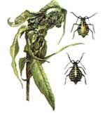 Жил на свете вредный жук…