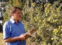 Желтая жемчужина из Красной книги