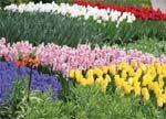 Идеи и краски голландской весны