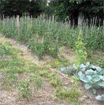 Первым делом — почва. Выращивание томатов на узких грядках