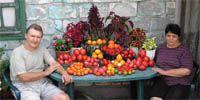 Осенний бенефис на томатных грядках