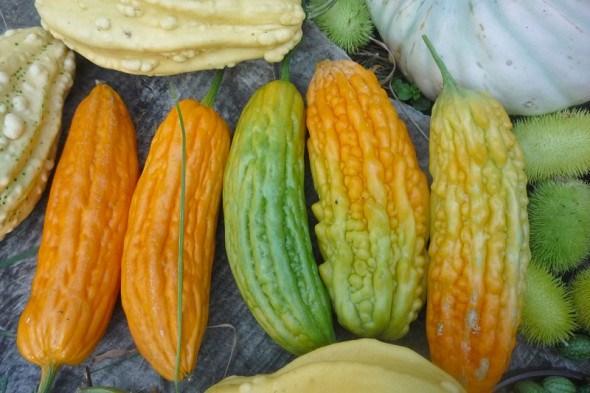 Всесильна тропіканка – момордика: вирощування, вживання в їжу та цілющі властивості плодів
