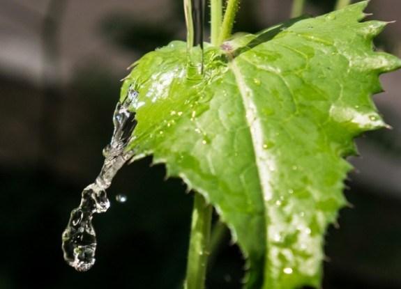 Захист від шкідників при крапельному зрошені та поливі