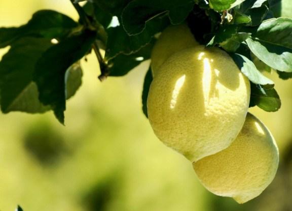 лимони в хаті