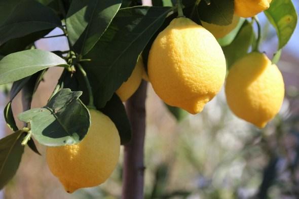 лимони захист
