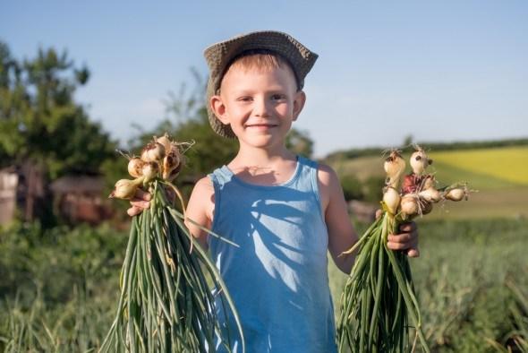 Мальчик на поле с луком