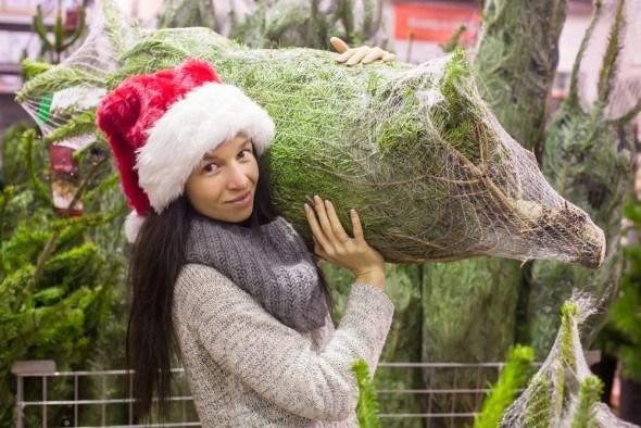 Покупаем новогоднюю елку