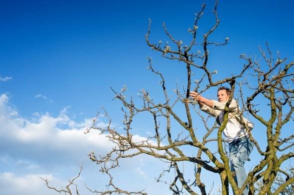 Инструменты для обрезки плодовых, парковых деревьев и кустарников