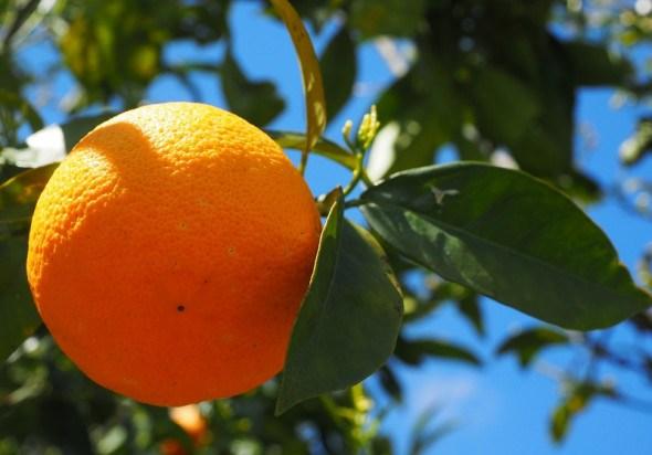Апельсин: символ літа, достатку і любові